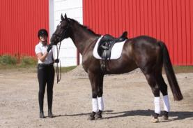 ipso facto racehorse